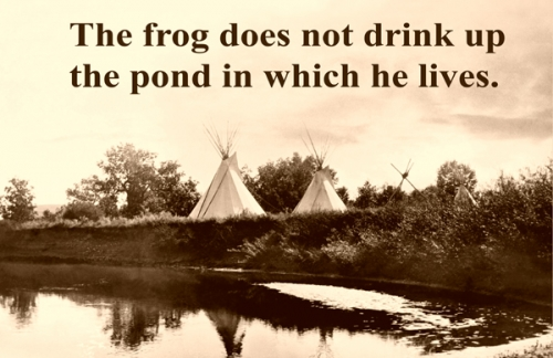 The Frog Does Not ... 11x17 Poster