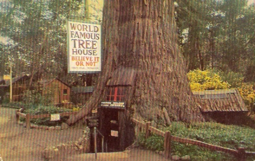 Tree House Park California Postcard
