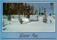 Winter Fun, Snowmobiling in Montana Postcard