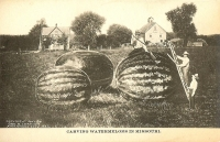 Carving Watermelon in Missouri Postcard