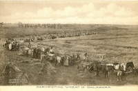Harvesting Wheat in Oklahoma Postcard