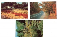 Nature Postcards - Set of 3