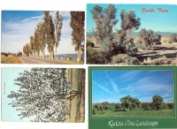 Trees in Nature - Set of 4 postcards