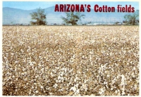 Arizona's Cotton Fields